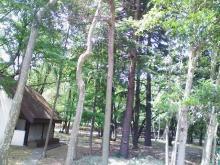 アライヴログ by MAD大内 ~雑記ワイルド~-forest